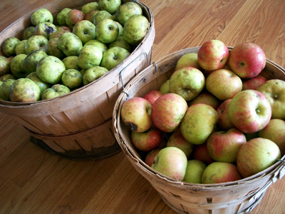 basket of apples for crockpot apple sauce