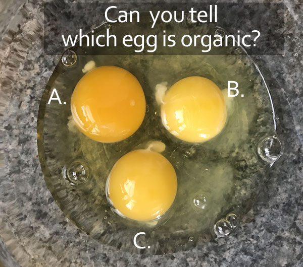 can you tell which egg is organic?