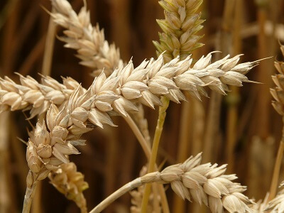 whole grains in a healthy low carb diet
