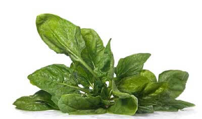 healthy food of spinach for your family