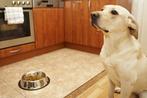 healthy kitchen with clean dog bowls