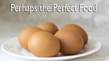 eggs are the perfect food