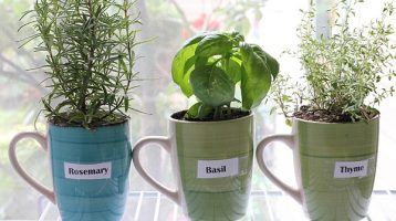 Windowsill Herb Garden for Beginners