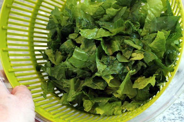 romaine lettuce washed for summer salad