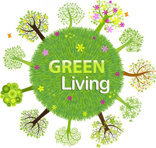 Easy Steps to Greener Living